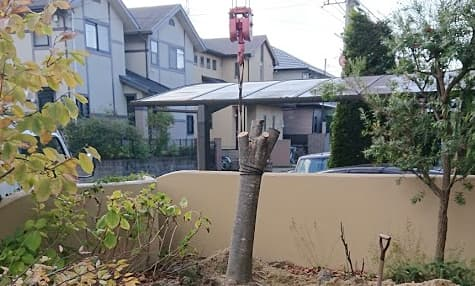 庭木の抜根・撤去