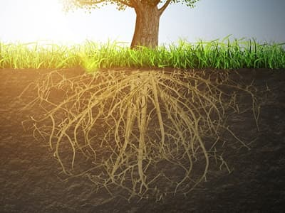 木の根っこイメージ