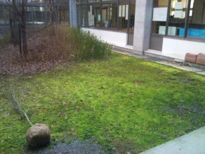 小学校記念植樹