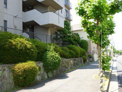 マンションの年間植栽管理事例。植栽管理費が約40%ダウン(大阪府枚方市)