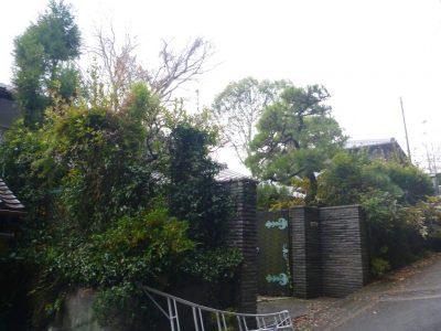 ソメイヨシノ(サクラ)の落葉で貯水槽への影響があるため強剪定しました。