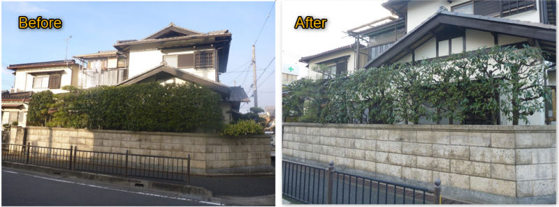 剪定のBefore・After