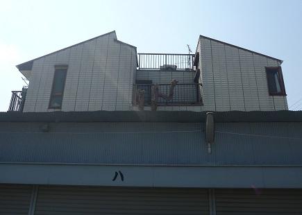 倉庫の屋根より高くなった木