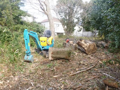 切った木の撤去