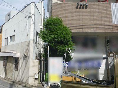 3.5mのシラカシを剪定して植栽スペースに収まる形に 大阪府寝屋川市のビル