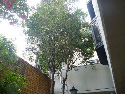 ホテルの植栽を剪定|改装に伴い景観を整えたい 京都市下京区