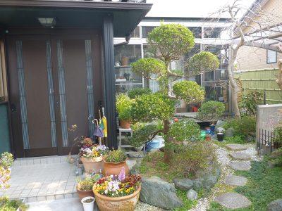 ツゲの伐根とモミジの植栽|理想のモミジを探してほしい 京都府京田辺市