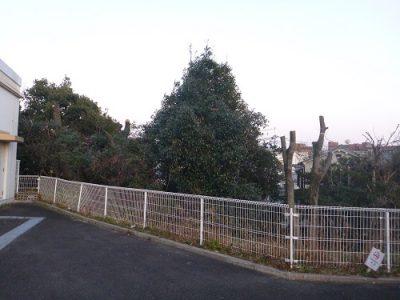 剪定後の高木