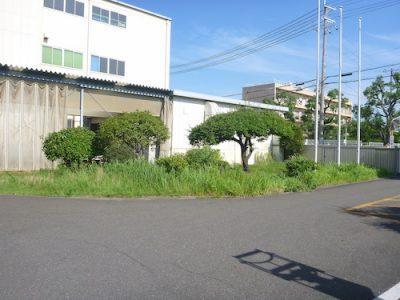 工場敷地350㎡の草刈りとウォールガーデンのツタ剪定 東大阪市