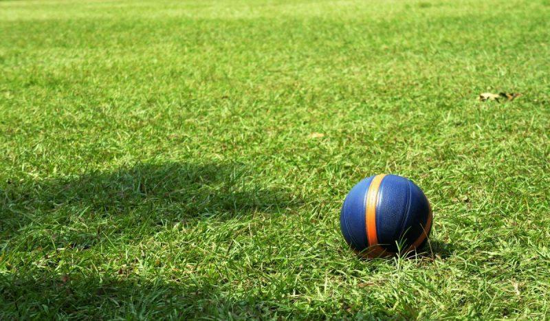人工芝と天然芝