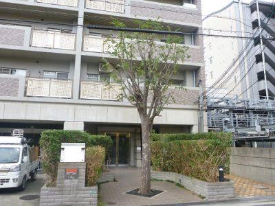 カナメモチ生垣などの植栽剪定 大阪府堺市堺区 マンション植栽管理