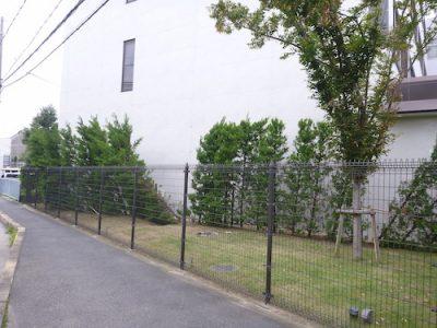 生垣の補修|台風で工場に植えたレイランディの生垣が支柱ごと傾いた 京都府長岡京市