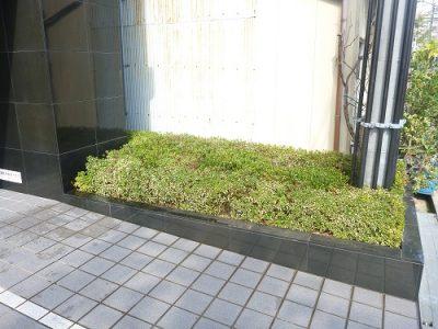 マンションエントランスの植栽の部分的な植え替え 周囲の木になじむように 大阪市
