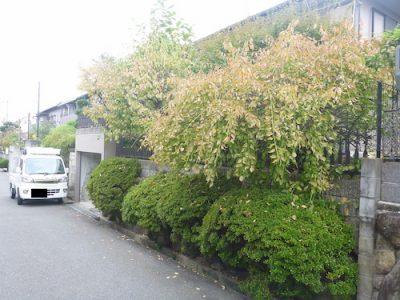 空き家の庭木剪定|遠方に引っ越したため手入れに行けない 枚方市