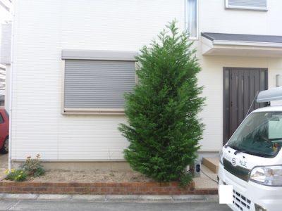 レイランディの抜根|家の前の花壇の木を無くして欲しい 枚方市