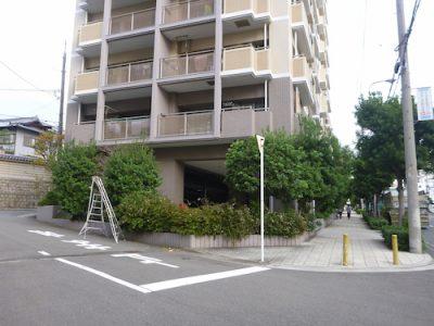 マンション周りの木の剪定|植え込みにゴミを捨てられる 大阪市天王寺区