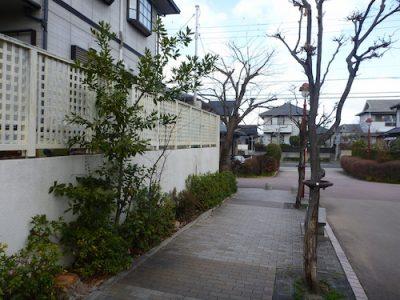 ケヤキを3本伐採|歩道への落ち葉が迷惑になる 京都府京田辺市