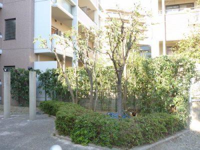 鬱蒼としたマンション敷地内7箇所の植栽剪定 大阪市東淀川区