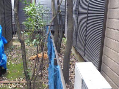 狭い敷地に生えたアラカシ2本を隣の敷地から伐採 京都府八幡市
