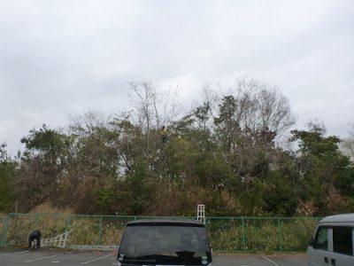 敷地外への落ち葉がひどいクヌギ8本を強剪定 大阪府枚方市