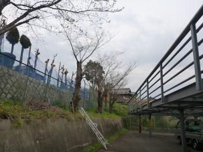 工場駐車場の桜6本を1日で伐採 大阪府枚方市