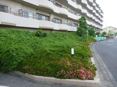 京都府八幡市植栽管理・外周低木作業前