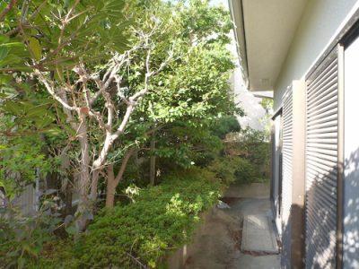モチノキなど10種の木を伐採(LINEで依頼・立ち合いなし)東大阪市