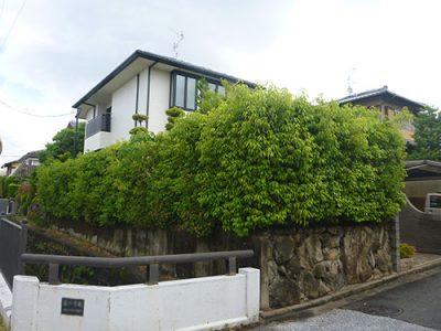 シラカシ生垣剪定|引っ越し先の庭木が鬱蒼としている 大阪府枚方市