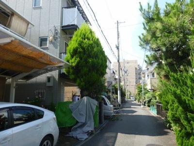 敷地からはみ出たゴールドクレストの伐採 東大阪市