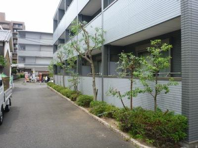 クロガネモチなどの植栽を強剪定 大阪府茨木市 マンション