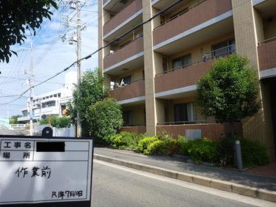 マンションのシマトネリコ2本などを剪定 大阪府高槻市