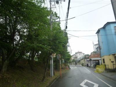 道路沿いで電線にかかったサクラ並木( 7〜10m)の剪定 大阪府枚方市